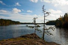 Forest湖在芬兰 库存照片