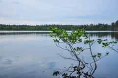 Forest湖在讨厌的多云夏日 免版税库存图片