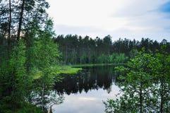 Forest湖在讨厌的多云夏日 库存照片