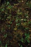 Forest湖植被 免版税图库摄影