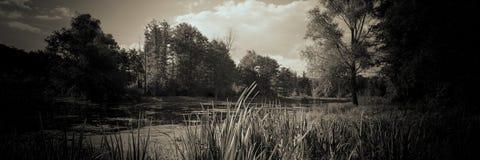 Forest湖芦苇森林和云彩 万维网横幅 免版税库存图片