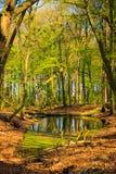 Forest湖风景 免版税库存图片