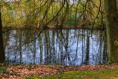 Forest湖风景 免版税库存照片
