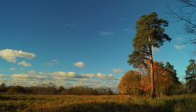 Forest_002 免版税库存照片