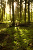 The forest Stock Photography