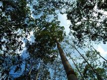 Forest2 Fotografia Stock Libera da Diritti