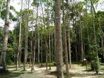 Forest3 Fotografia Stock Libera da Diritti