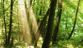 forest стоковое изображение rf