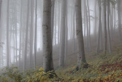 Forest. Autumn fog in the forest Royalty Free Stock Photography