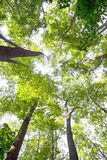 Forest. Green branches of trees in summer wood Royalty Free Stock Photography