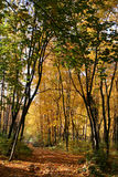 Forest. The nature of Russia. Autumn forest. Photo Royalty Free Stock Image