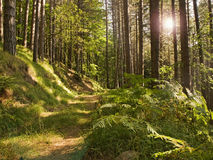 The forest Stock Images