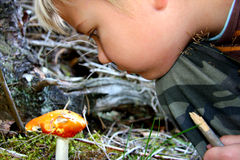 ...in forest... Boys like to be in forest and look for magical things Stock Images