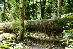 Forest. Fallen log overgrown with grass Stock Photos