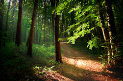 Forest. In autum with nice light and road Royalty Free Stock Image