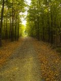 Forest. Path with color leafs during autumn Royalty Free Stock Photo