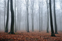 Forest. At a foggy day Stock Images