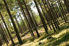 Forest. In summer on a summy day Royalty Free Stock Photos