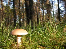 At the forest. Ready to pick mushrooms Royalty Free Stock Photography