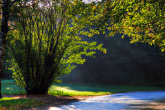 Forest. Bush, lit by the rays of the morning sun stock photos