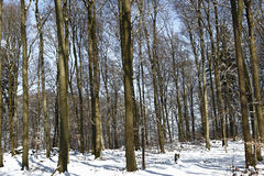 Forest. View of forest with old snow Royalty Free Stock Images
