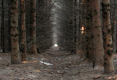 Forest. Pine forest somewhere in Europe Stock Photo