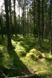Forest Stock Image