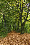 Forest. Spring forest on the landscape Royalty Free Stock Photos