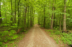 The forest. A path leading into a forest Royalty Free Stock Images