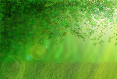 Forest. Sunny place in the forest Royalty Free Stock Images