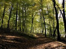 Forest. Path through a autumn forest stock image