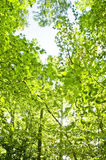 Forest. Green forest in summer with sunshine Stock Photos