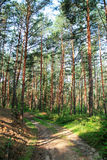 Forest. Green forest with road on sunny day Stock Photography
