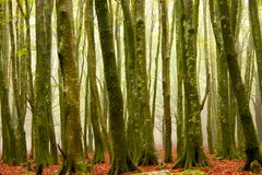 Forest. Winter forest, Italy, Calabria, Aspromonte Stock Images