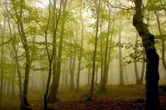 Free Forest Stock Photos - 1674683