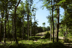 Forest Stock Images