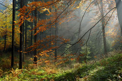 Forest. Autumn forest in detail view with mysterious sun rays during sunset royalty free stock image