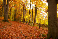 Forest. The image shows a autumn forest Royalty Free Stock Images