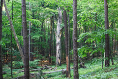 Forest. Natural green forest, spring time royalty free stock photography