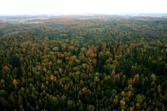 Forest. Lithuanian forest in the evening from sky Royalty Free Stock Photos