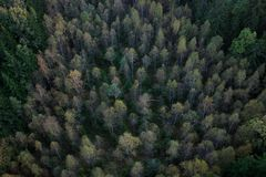 Forest. Lithuanian forest in the evening from sky Stock Photography