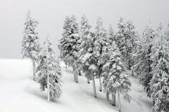 Forest. Ski slopes in Poiana Brasov Stock Photos
