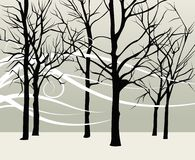 Forest. In winter time with styled wind Stock Images