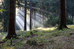 Forest #21 Royalty Free Stock Images
