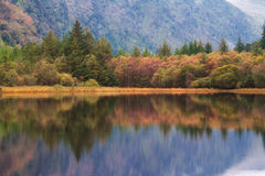 Forest. Picture of forest with reflection. Taken in Glendalough in the morning Royalty Free Stock Photography