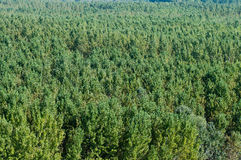 Forest. Aerial view of the green forest in summer Stock Photos
