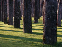 Forest. And trees Royalty Free Stock Photography