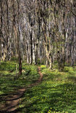 Forest. Beautiful spring forest landscape from Bulgaria Stock Images