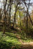 Forest. Beautiful spring forest landscape from Bulgaria Stock Photos