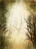 Forest. Fantasy charming  golden fairy forest with fog Stock Photography